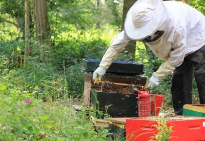 Afbeelding van Op bezoek bij de imker bij Het Bijenhuis